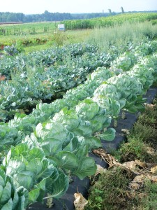 Cover photo for USDA With a New Microloan Program
