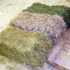 Forage hay bales (Michigan State University Cooperative Extension)
