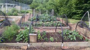 Cover photo for Community Garden for Community Good
