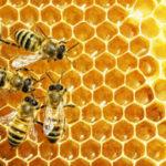 Image of honeybees
