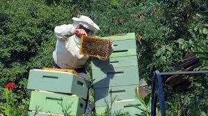 Cover photo for The Buzz on Beekeeping 2019
