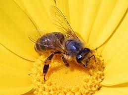 Cover photo for 2019 Advanced Honeybee Course