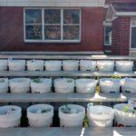 Bucket garden kits