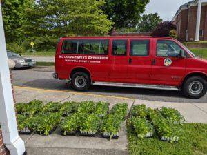 victory garden transplant sets