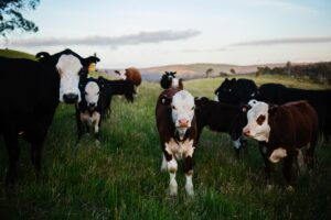 Cover photo for Pasture Management: Rotational Grazing