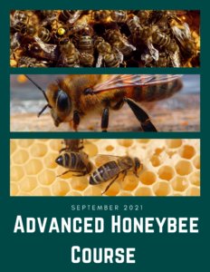 Cover photo for Advanced Honeybee Course
